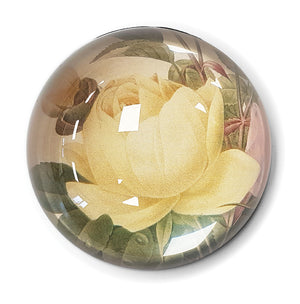 Yellow China Rose and Pink China Rose Paperweight<br>(Pack of 5)