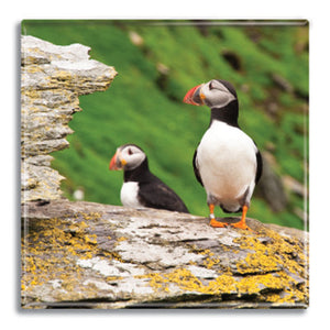 Puffins Fridge Magnet<br>(Pack of 10)