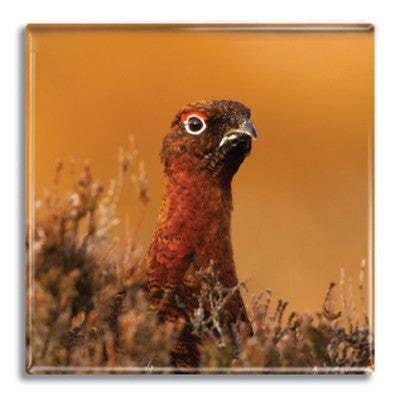 Grouse Fridge Magnet<br>(Pack of 10)