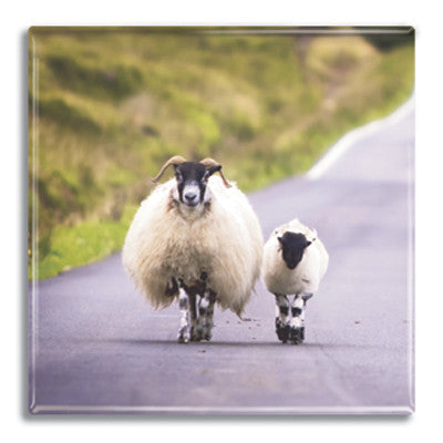 Sheep  Fridge Magnet<br>(Pack of 10)