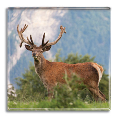 Stag Fridge Magnet<br>(Pack of 10)