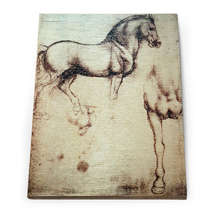 Study of a Horse Wooden Fridge Magnet<br>(Pack of 10)