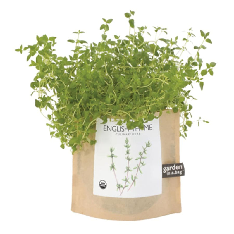 English Thyme Garden In A Bag