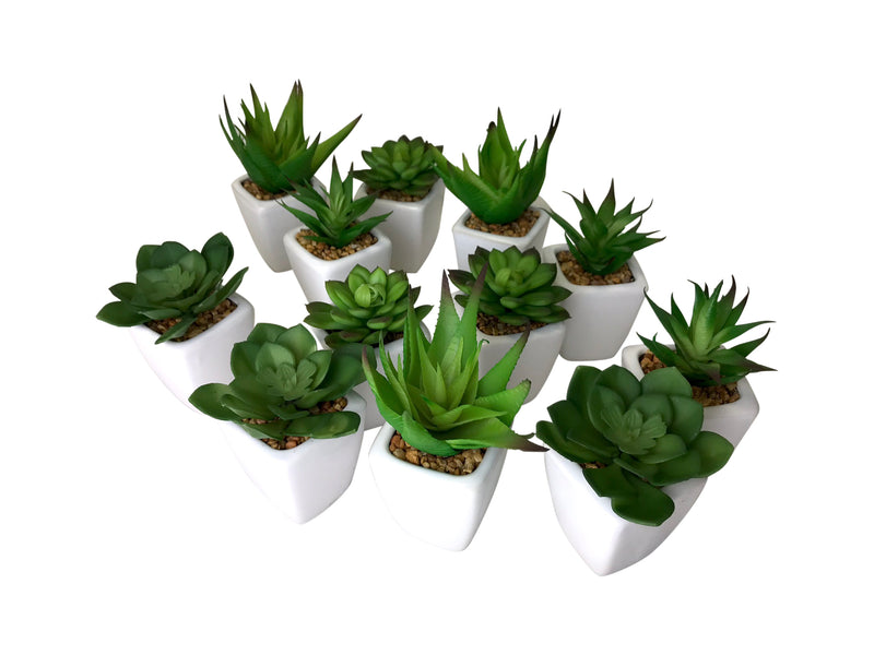 Succulents in White Pot