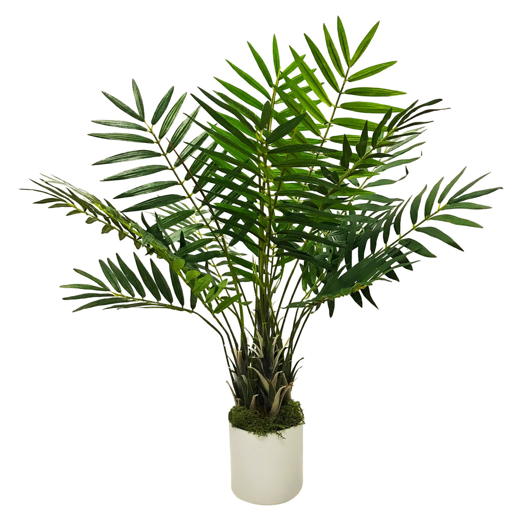 Palm Desktop Plant