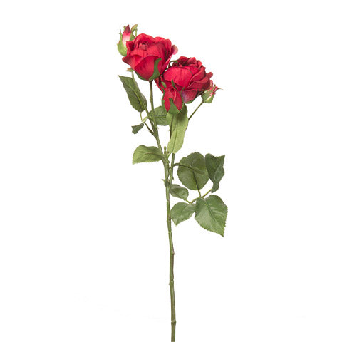 "22"" English Red Rose"