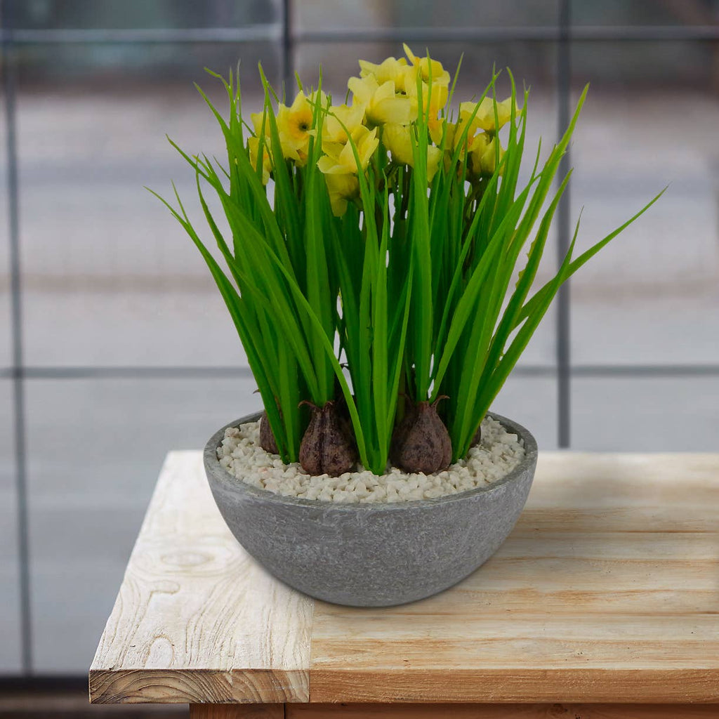 Flowering Buttercup Daffodil Arrangement
