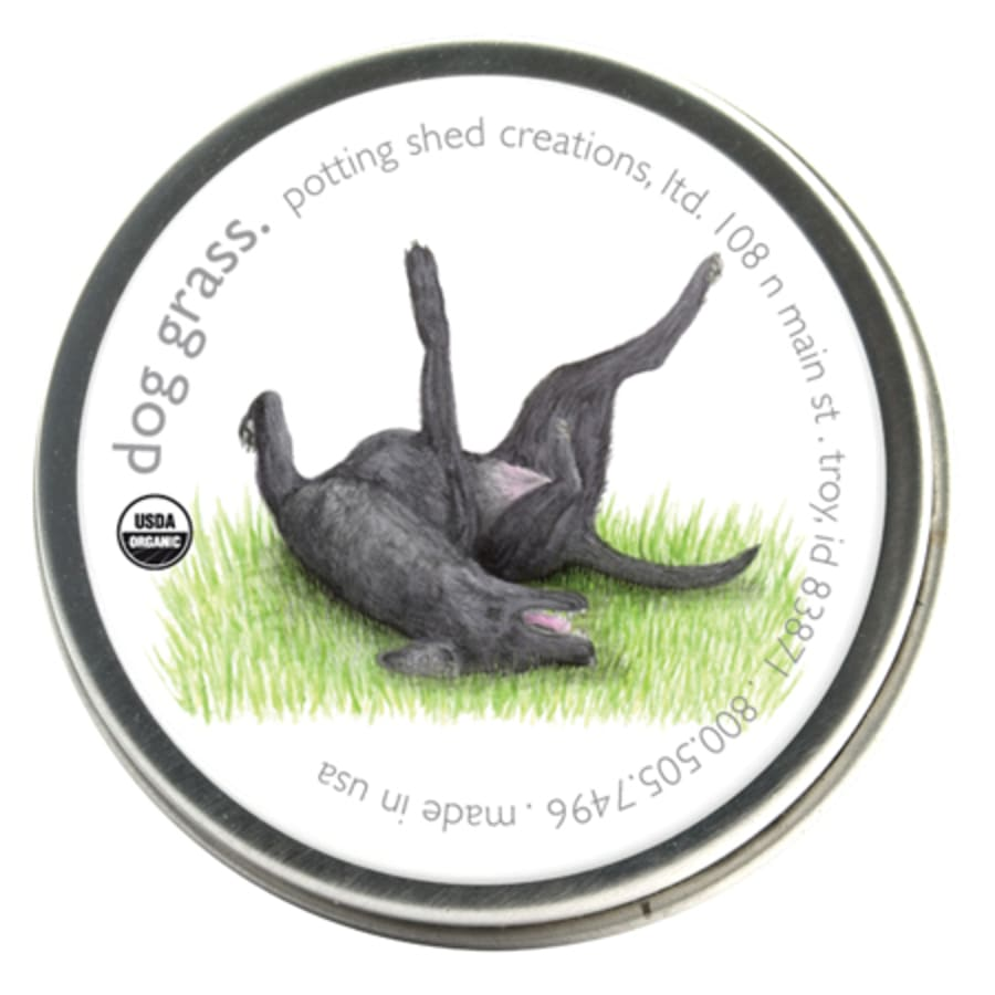 Dog Grass Seeds