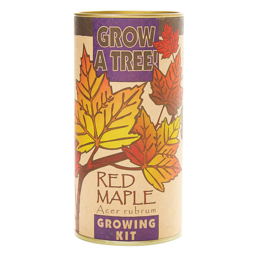 Red Maple - Seed Grow Kit