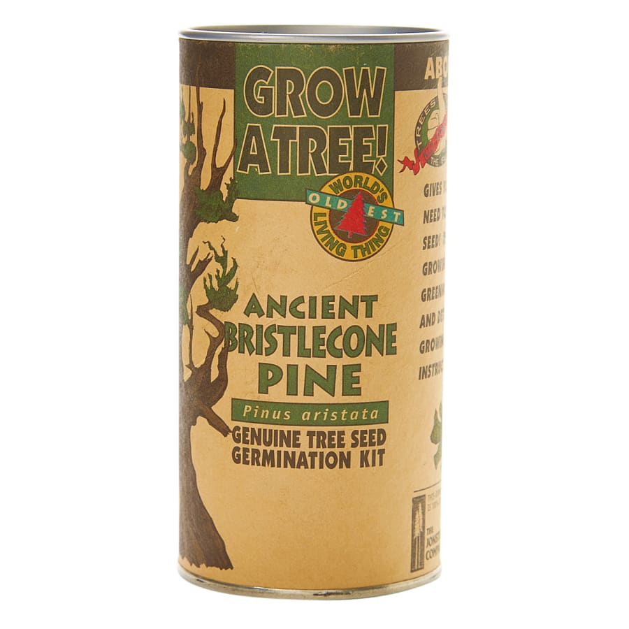 Ancient Bristlecone Pine - Seed Grow Kit