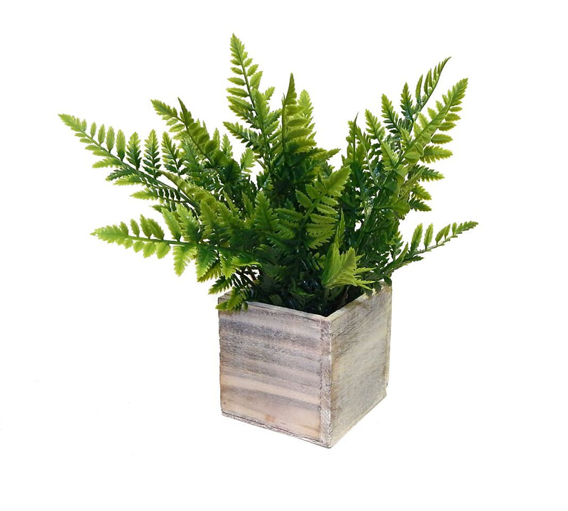 Potted Fern Arrangement