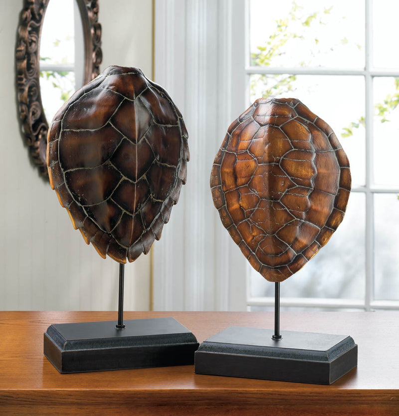 Turtle Shell Museum Decor