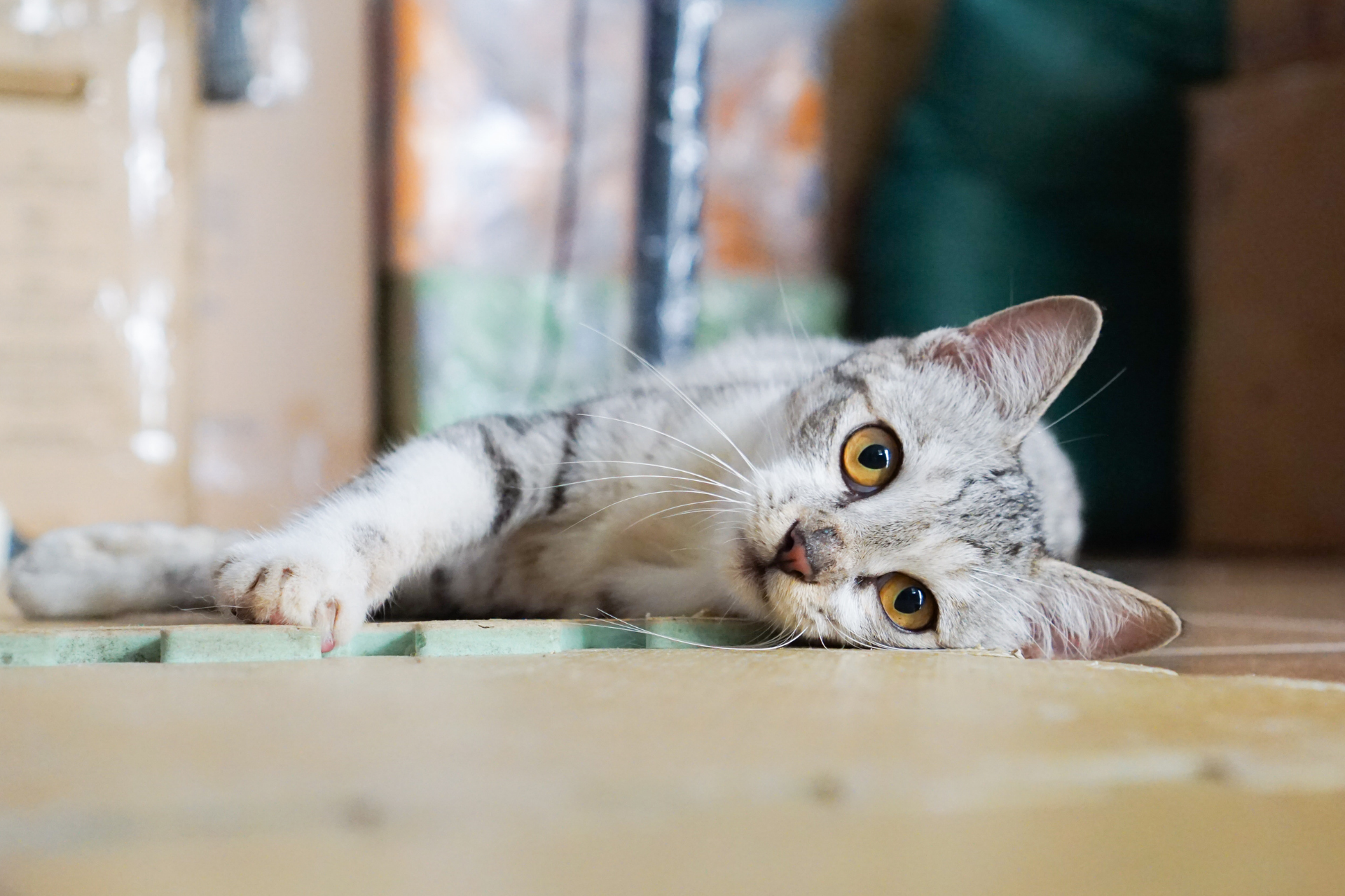 Five Ways to Help Your Cat Beat the Winter Blues