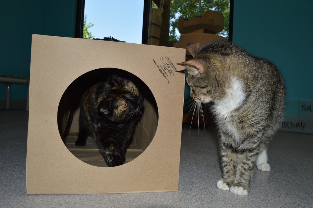 Supercharge Your Cat's Hide and Sneak