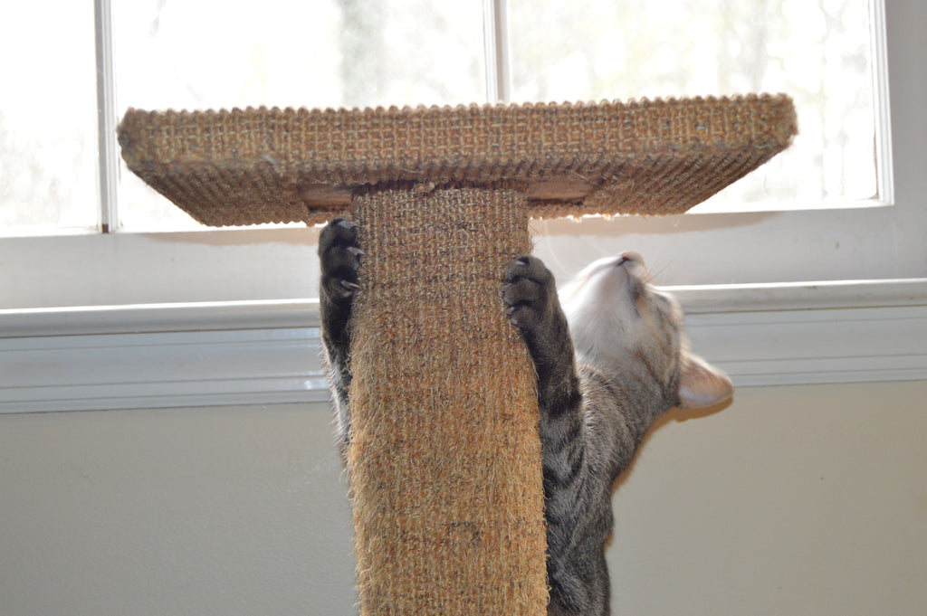3 Ways to Get Your Cat Scratching the Right Things
