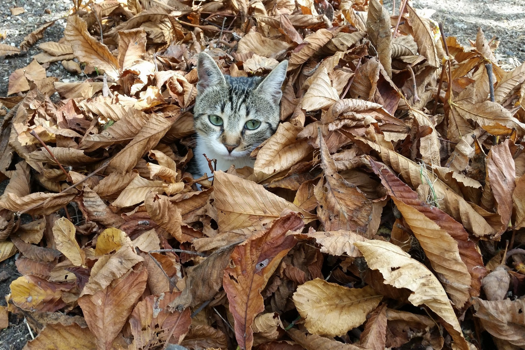 5 Fun Fall Feline Activities