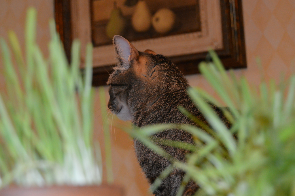 The Purrfect Cat Grass in Three Easy Steps