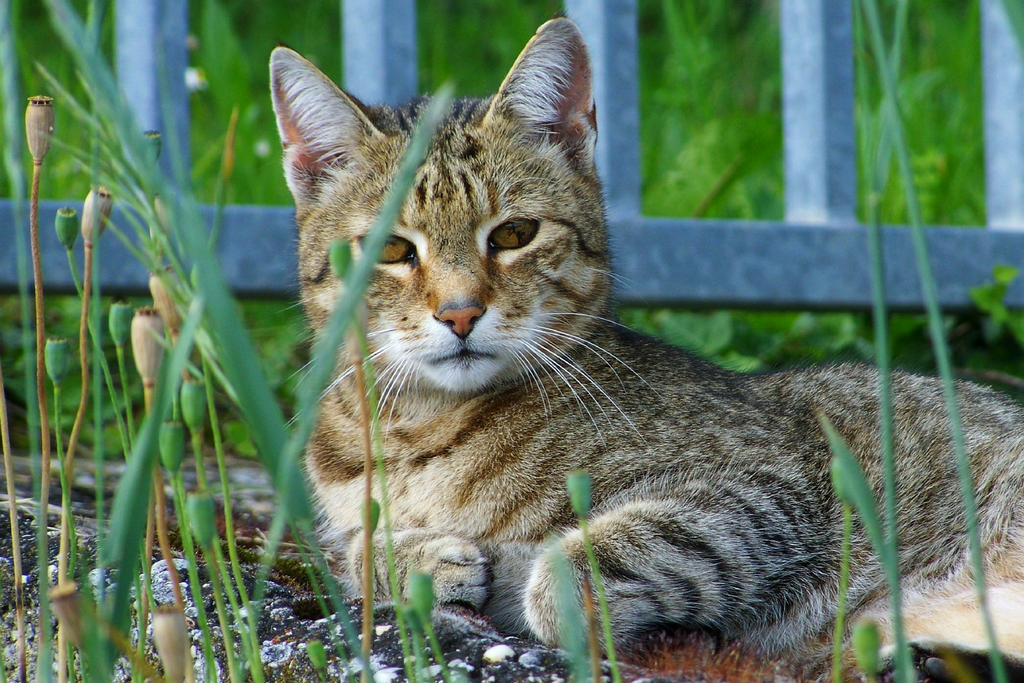 Simple Ways to Bring the Outdoors In For Your Cat: Part 2