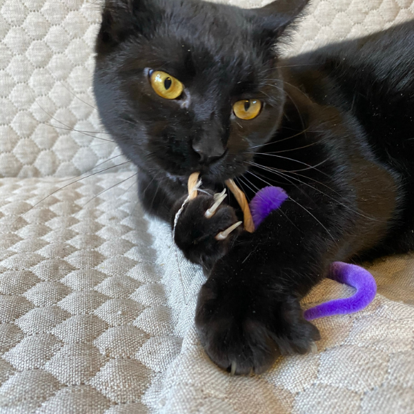 black cat claws holding onto an A-lure-ring cat toy