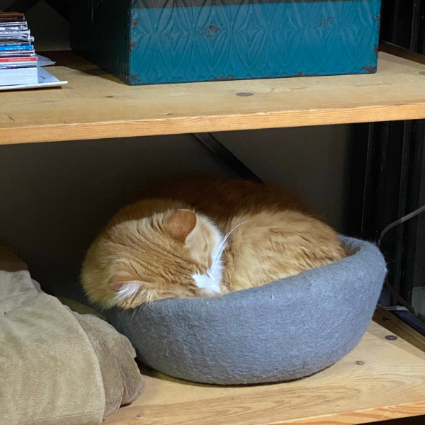 orange cat curled up in a gray wool bed placed on a low shelf