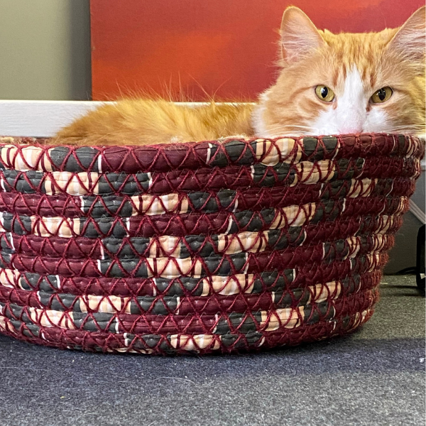 long hair orange cat staring at camera while curled up on a burgundy woven cat bed