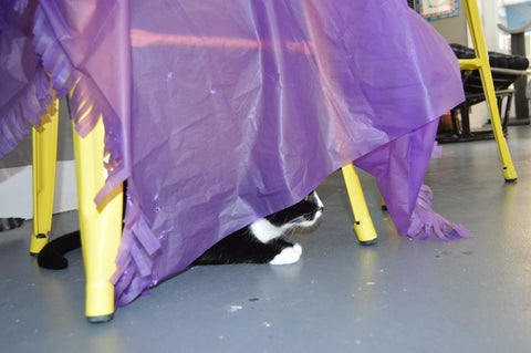 Black and white cat peering out from under the Magic Carpet cat toy which is draped over a chair to create a tent