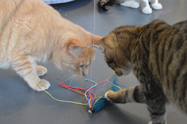 one orange cat and a tabby cat both looking at a squid cat toy from Dezi & Roo