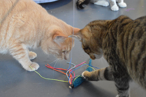 Two cats playing with a squid cat toy