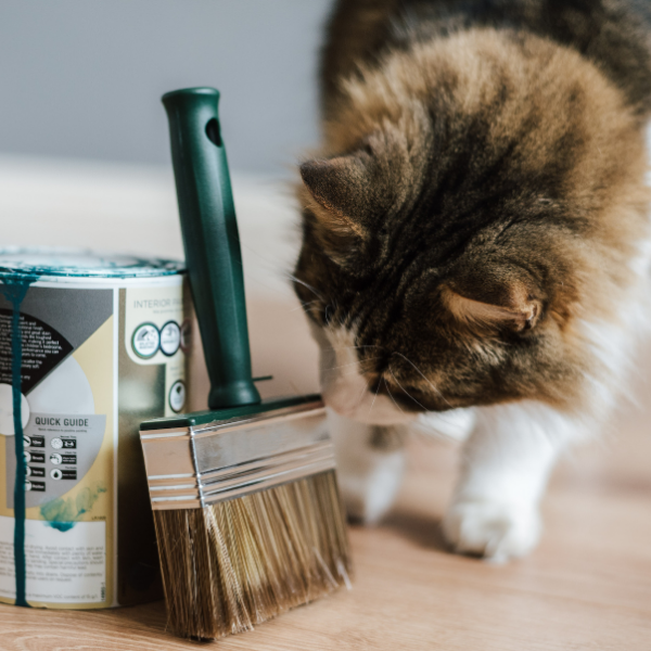 cat sniffing a paint brush next to a paint can