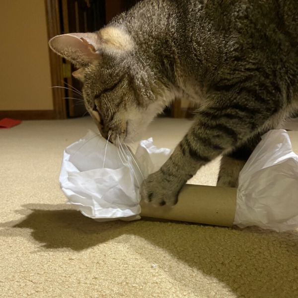 tabby cat pawing a piece of tissue paper stuffed into an empty toilet paper roll
