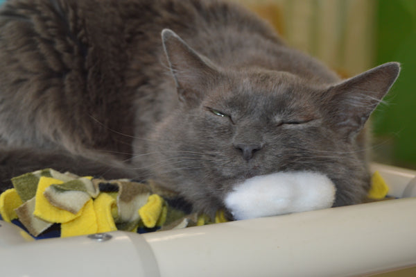 gray cat content with eyes half closed and head on plush cloud toy