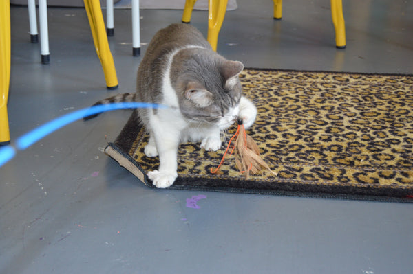 Cat playing with a Cuttlefish cat toy by Dezi & Roo