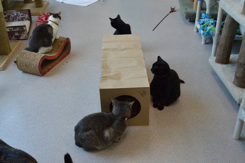 A group of shelter cats playing with the Hide and Sneak paper cat tunnel toy