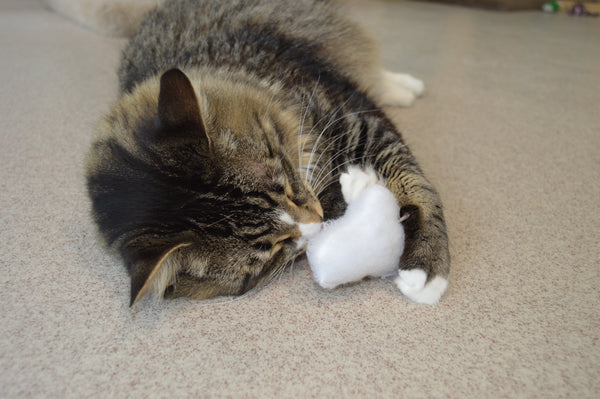 tabby cat with head buried in cloud toy