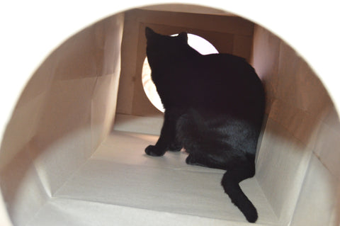 backside of a cat looking out of a paper cat tunnel