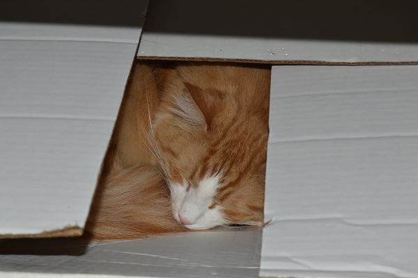 Orange and white ginger tabby cat hiding asleep in a box