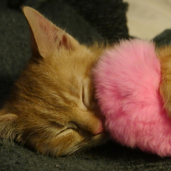 orange tabby cat sleeping curled up with a pink fuzzy toy