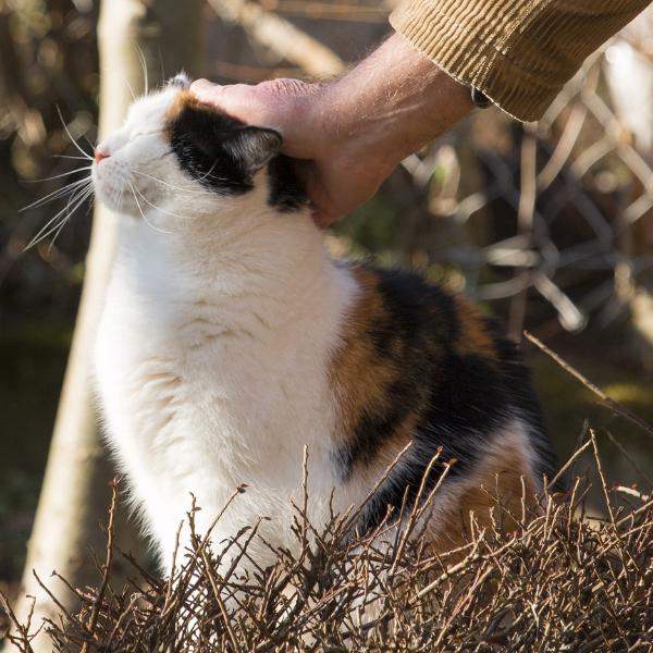 hand reaching down to pet a calico cat on the head