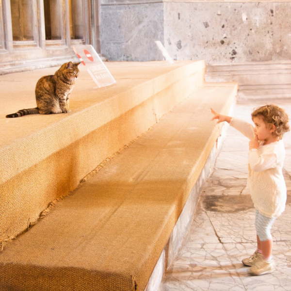 small child look at and pointing to a cat sitting at the top of some steps