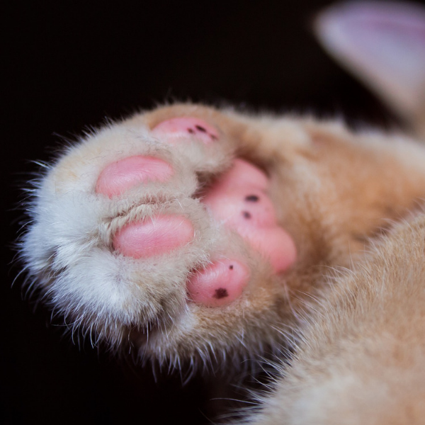 close up of a cats toe pads