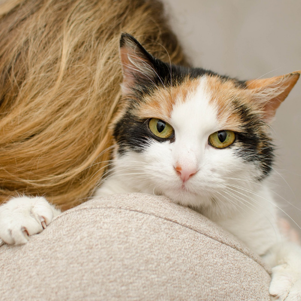 backside of a woman with a cat on her shoulder looking directly at camera