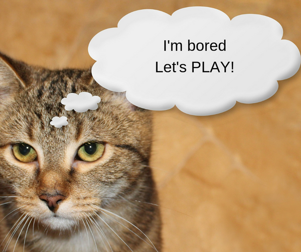 tabby cat with thinking cloud that says I'm bored, let's play