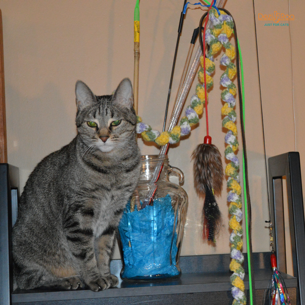tabby cat sitting on shelf next to vase filled with wand cat toys