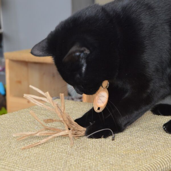 Black cat playing with a paper flutter-ring cat toy wand attachment