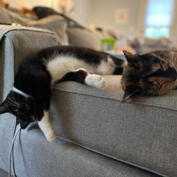 two cats lying on the couch with one of the cats hanging their head over the edge
