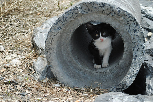 gray and white kitten in construction concrete tunnel