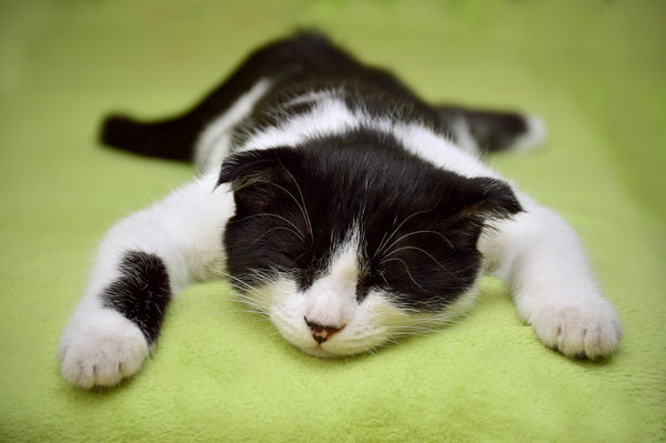 black and white kitten sprawled out on floor asleep