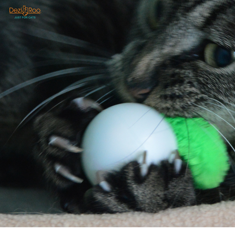 declawing-cats