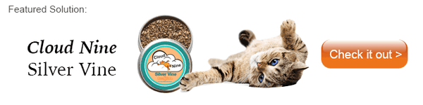 Cloud Nine pure potent silver vine for cats - better than catnip