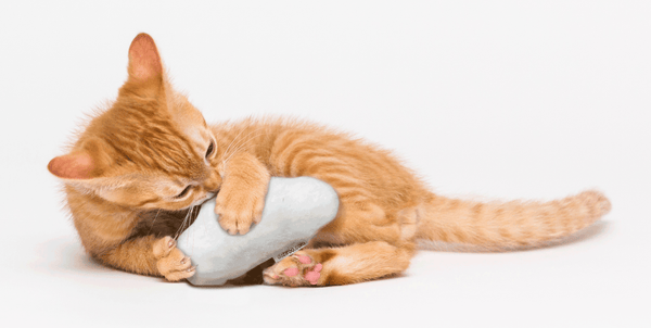 Orange tabby kitten playing with a small plush cloud toy